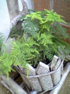 玄関前のグリーン